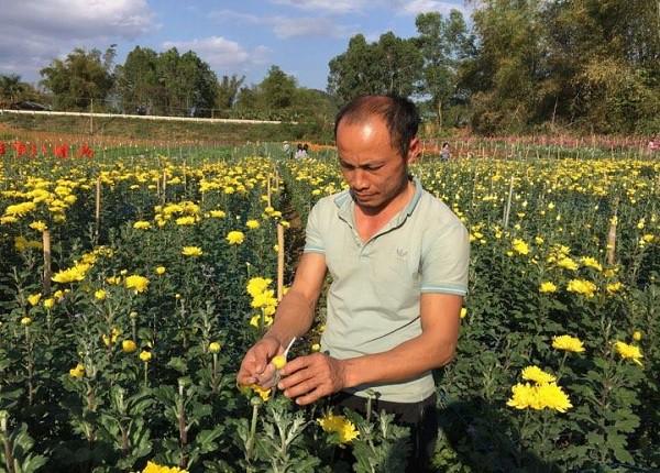 Vào thời điểm đầu tháng 3.2018, vườn hoa của gia đình anh Cương đang đua nhau khoe sắc chờ đến ngày thu hoạch bán ra thị trường