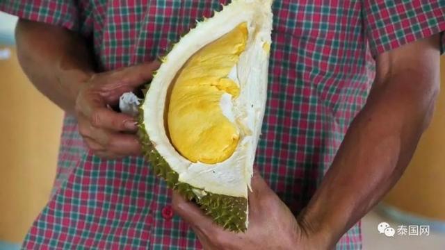 Giá sầu riêng Nuan Thong Cha hiện đạt 200 Bath/kg (~ 145.000 VNĐ), là loại đắt nhất đang được bán trên thị trường sầu riêng