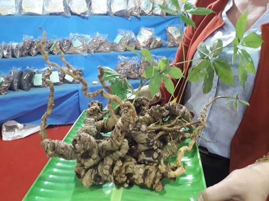 2 củ sâm Ngọc Linh được rao giá hơn 1 tỷ