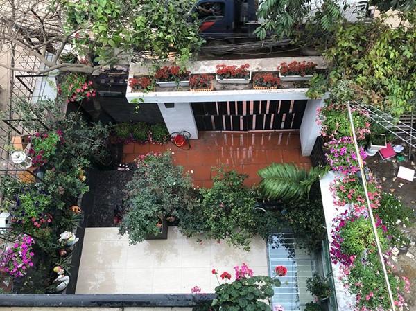 Chủ nhân của ngôi nhà phủ đầy hoa hồng trên phố Nghi Tàm là người phụ nữ mê hoa, yêu thơ và thích chơi đùa cùng trẻ nhỏ. Chị tên Thùy Linh, làm kế toán, là mẹ của một cậu con trai và hai cô con gái.