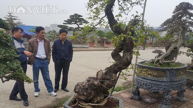 Hiện, cây kiểng có dáng cực đẹp này đang được nhiều dân chơi cây ở trong và ngoài tỉnh đến xem cây và hỏi mua.