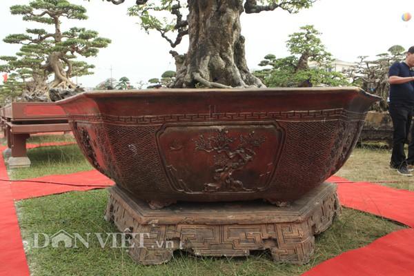 Chiếc chậu nuôi cây khế cổ thụ cũng được anh Toàn thiết kế rất cầu kỳ và đẹp.