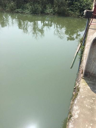 Khúc sông nơi anh Bảy nhảy cầu tự tử