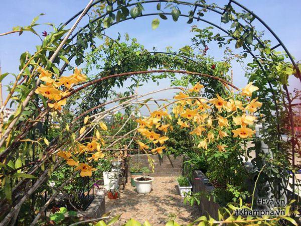 Hoa lan ngập tràn hương sắc trong khu vườn của chị Hà.
