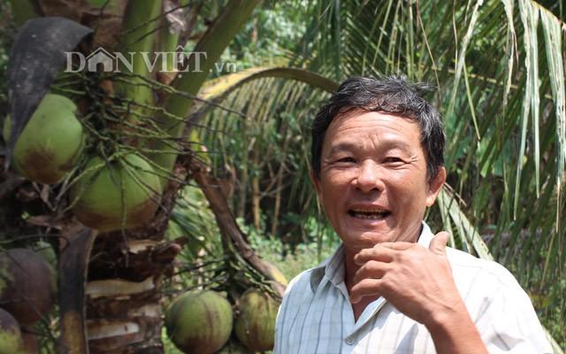 Mỗi tháng thu 24 triệu đồng từ trồng dừa