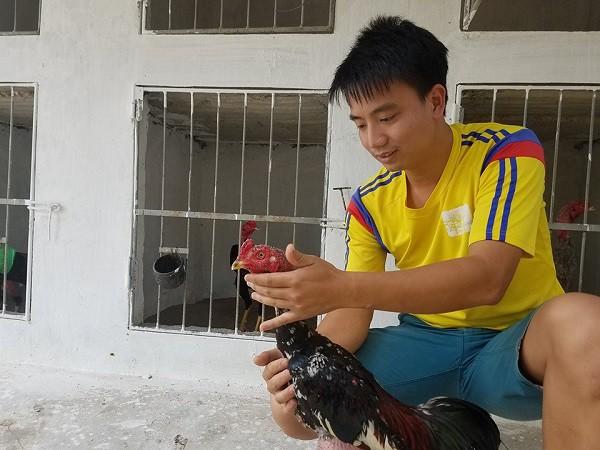 Dược sỹ trẻ thu lãi 40 – 50 triệu đồng/tháng từ nuôi gà chọi