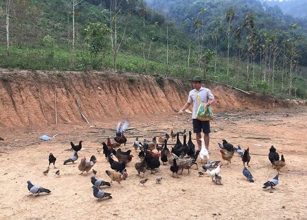 Lão nông người Lào kiếm 150 triệu nhờ nuôi gà đen thả vườn trên đất Điện Biên