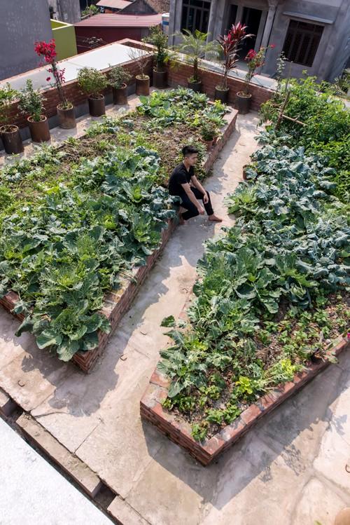Mái nhà được xử lý chống thấm tốt để có thể bố trí những bồn trồng cây gọn gàng trên sàn nhà thay cho các khay nhựa, thùng xốp.