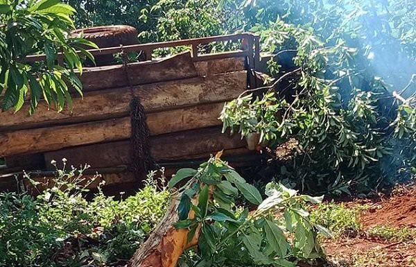 Xe cày chở đầy gỗ bị lật nghiêng, gãy rời bánh xe nằm bên rẫy cà phê