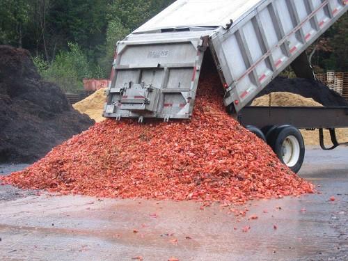 Ngày nay nông dân Mỹ vẫn dùng vỏ tôm hùm làm phân bón. Ảnh: Coast of Maine.