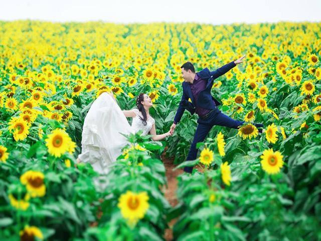 Cánh đồng hoa hướng dương.