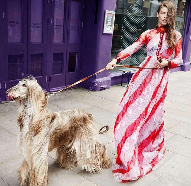 Chú chó sang chảnh nhất thế giới, mỗi bộ ảnh tốn trăm triệu đồng