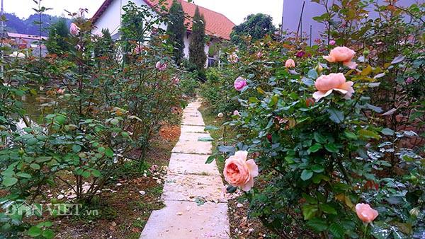 Vườn hồng ngoại bạc tỷ ở đèo Vạn Lý của lão nông xứ Lạng