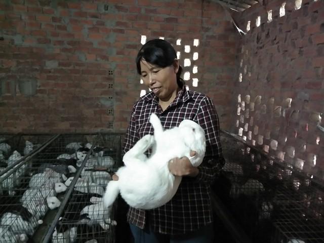 Về khâu chăm sóc, cũng như một số bệnh loại bệnh của thỏ đều được bà Cậy chú ý đặc biệt