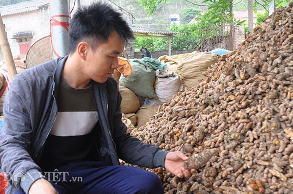 Thầy giáo trẻ về quê chế biến củ nghệ vàng, bỏ túi trăm triệu/năm