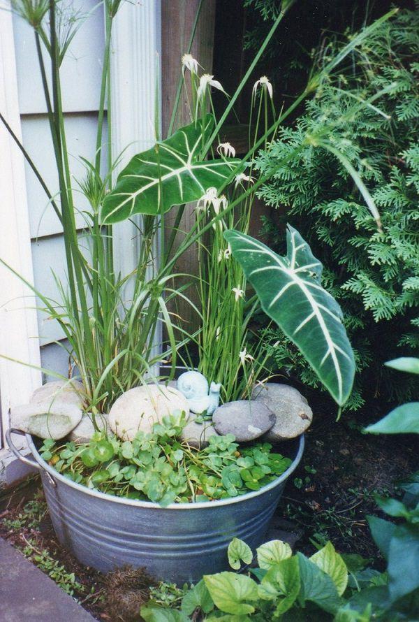 Xô nhôm thay bồn cây trồng đủ loại tạo tiểu cảnh sinh động trước nhà.