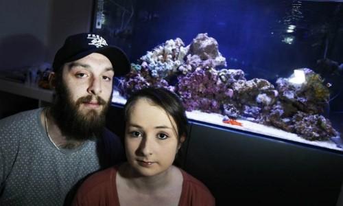 Chất độc nghi từ bể cá cảnh khiến cả gia đình nhập viện