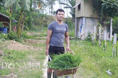 Xung quanh trang trại, Nguyễn Xuân Sơn trồng nhiều cỏ làm nguồn thức ăn chính cho đàn lợn rừng.