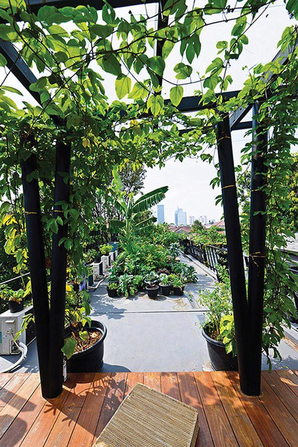 Sự phong phú của thảm thực vật được trồng trên gần như toàn bộ bề mặt của căn nhà bao gồm cả phần mái nhà giúp tạo sự mát mẻ, đồng thời mang đến cảnh quan như một ốc đảo tại khu đô thị đầy bức bối.