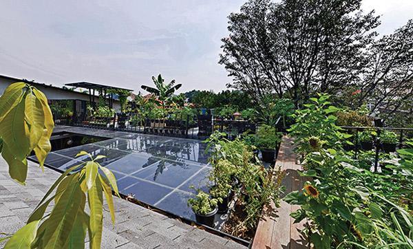 Lớp trần kính dầy này đảm bảo là giếng trời và lỗ thông gió cho toàn bộ căn nhà, cũng như đảm bảo ánh nắng cho 2 khu vườn bên dưới.