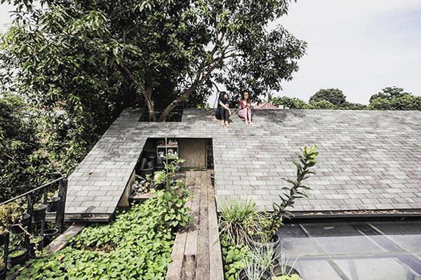 Mái nhà thậm chí còn được thiết kế lỗ để cho cây trưởng thành phát triển.
