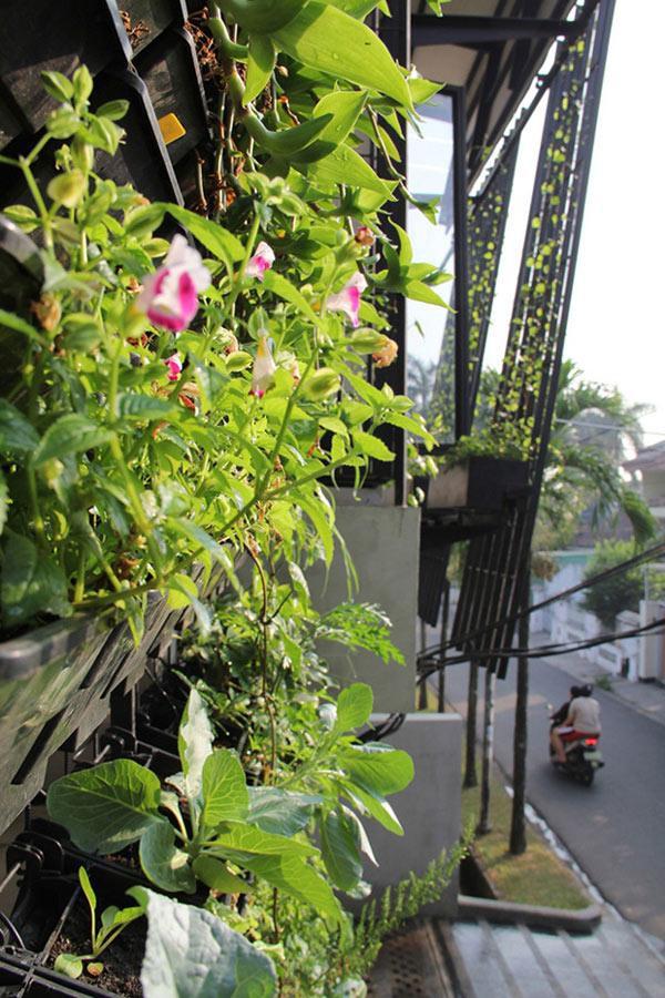 Ước mơ có một thảm thực vật bao phủ hết mặt tiền căn nhà để lọc không khí của gia chủ đã được thực hiện bằng cách tất các cửa sổ trong mỗi phòng các lỗ thông gió và ban công đều được trồng các loại cây.