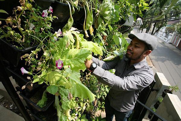 Cây cũng được trồng đủ loại. Có loại cây trồng thông thường trên mặt, trong các chậu nhỏ treo lên hoặc mọc trên các giàn.