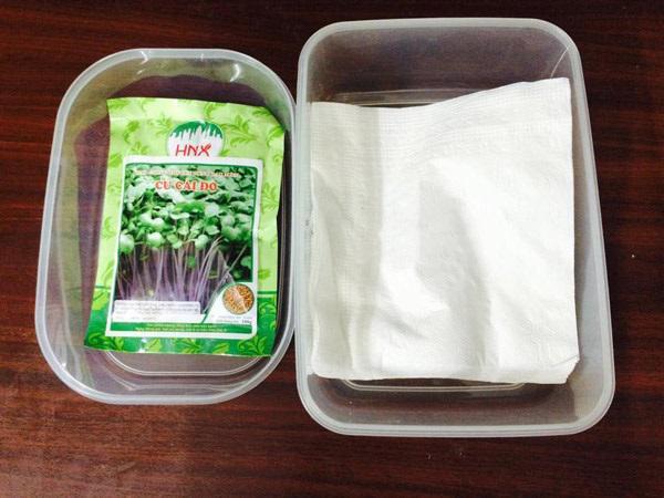 Chỉ cần sử dụng giấy ăn và mua hạt giống có sẵn bạn có thể trồng rau mầm đơn giản, sau 1 tuần là thu hoạch được.