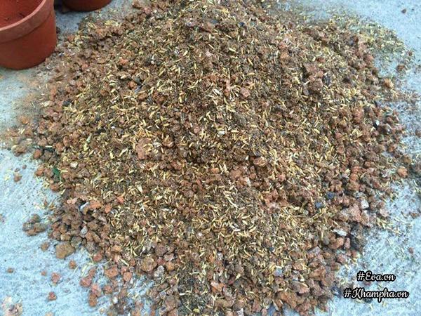Hỗn hợp trộn xỉ than, vỏ trâu và phân bò.