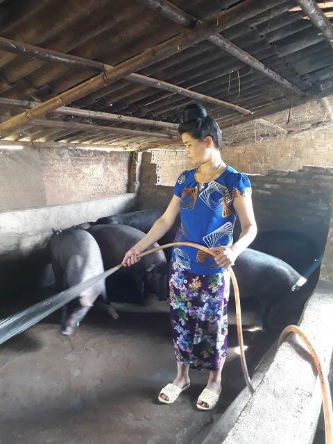 Nhờ nuôi lợn, gia đình chị Thắm đã thoát khỏi đói nghèo, vươn lên làm giàu