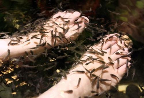Khách Trung Quốc bị tố tiểu tiện làm hàng nghìn cá chết