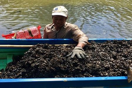 Anh Nguyễn Văn Chuẩn, ấp Bà Bèo, xã Lương Thế Trân kiếm được từ 200-300 kg hến/ngày.