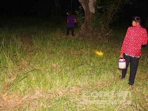 Những người dân ở xã Núi Tô đi săn ve đêm.