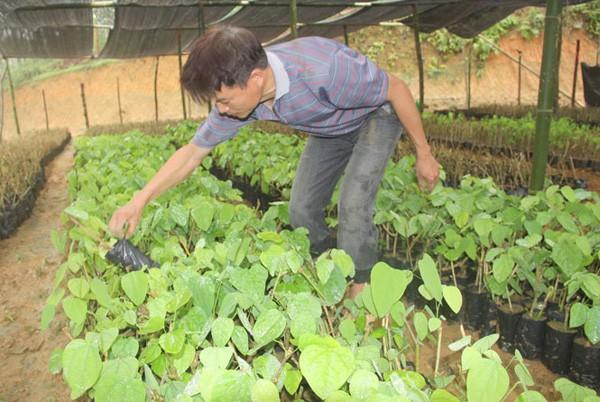 Anh Đắc chăm sóc các cây rau giống bò khai tại vườn của gia đình.