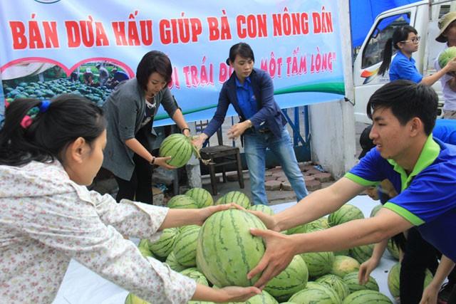 Cán bộ Tỉnh đoàn Quảng Ngãi trong một lần tham gia giải cứu dưa hấu cho người dân Bình Sơn.