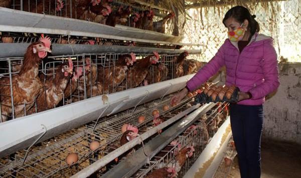 Nuôi gà siêu trứng, cặp vợ chồng trẻ kiếm trăm triệu mỗi năm