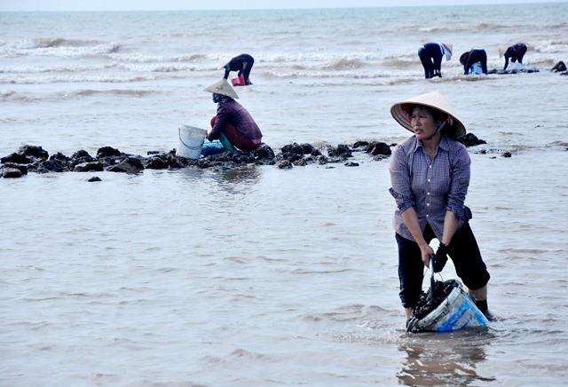 Để có nhặt được những con vẹm xanh to, nhiều người đã chọn các điểm bãi đá xa bờ, nước ngập...