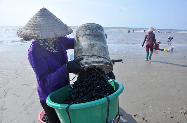 Nhiều món ăn ngon được chế biến từ loại hải sản độc đáo này như: vẹm xanh nướng mỡ hành, vẹm xanh hấp, vẹm xanh sốt kem hay sốt tỏi ớt...