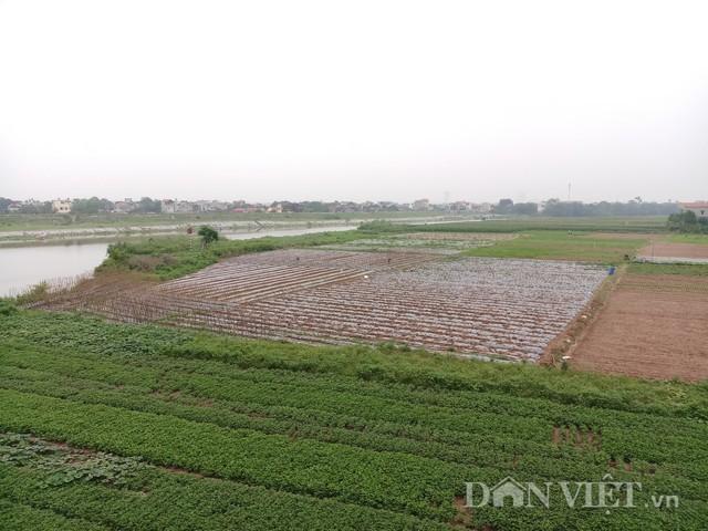 Nông trại rộng 5,2 ha bên bờ sông Đáy của anh Phạm Hoàng Hiệp. Ảnh: HĐ.