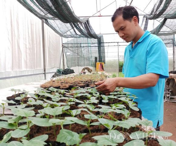 Anh Hiệp chủ động đầu tư xây dựng mô hình nhà lưới để sản xuất rau giống. Ảnh: HĐ.