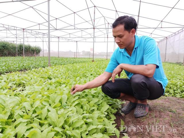 Nông trại với hơn 20 loại rau như súp lơ, rau muống, cà chua, bắp cải…Ảnh: HĐ