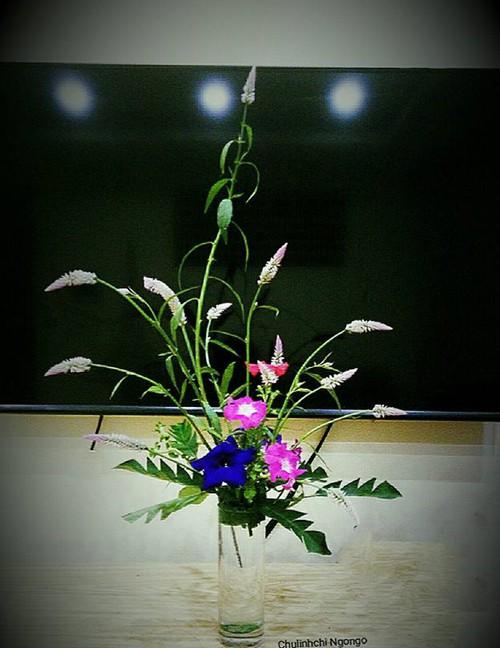photo-13-1528791033758777579157.jpg