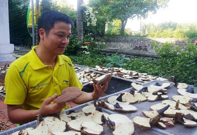 Anh Nguyễn Trung Kiên là cán bộ công chức nhưng có niềm đam mê và say sưa với nghề trồng nấm linh chi - loại được mệnh danh là thần dược.