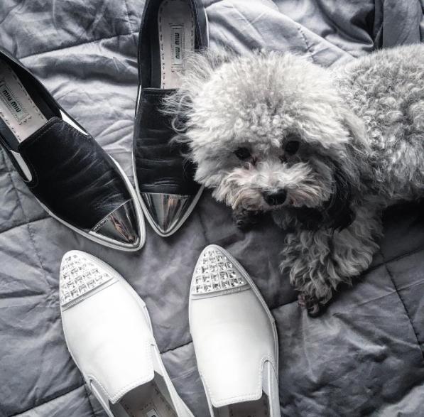 Giày MiuMiu cũng phải 2 màu mới chịu