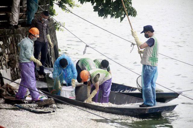 Rất đông lực lượng chức năng thu vớt cá chết trên mặt Hồ Tây.