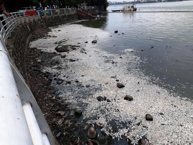 Hình ảnh xác cá nổi trắng trên mặt nước, trôi dạt vào góc hồ Tây sáng ngày 9/7. Ảnh: PV