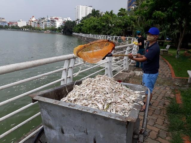 Xe đẩy chở rác sinh hoạt được sử dụng thành xe chở cá chết.