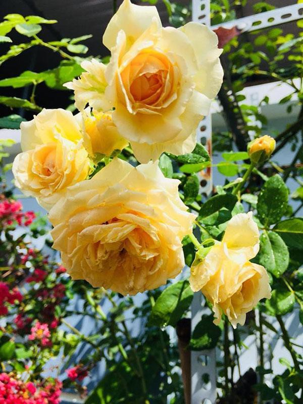 photo-2-15313866824921746924877.jpg