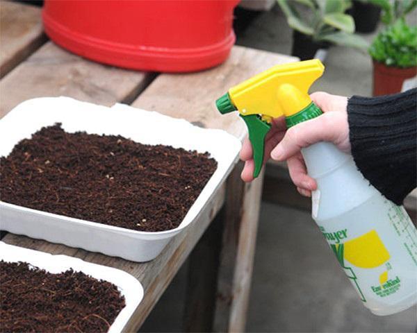 Luôn phải giữ độ ẩm cần thiết cho rau mầm, tránh ánh nắng gay gắt.