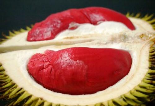 Sầu riêng ruột đỏ Malaysia được bán tại TP HCM với giá khoảng 1 triệu đồng/quả - Ảnh: YD